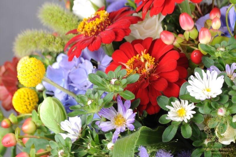 Bukiet kwiatów Kraków cynia aster żeniszek hortensja kraspedia róża dziurawiec Agnieszka Błaszczyk abkwiaty