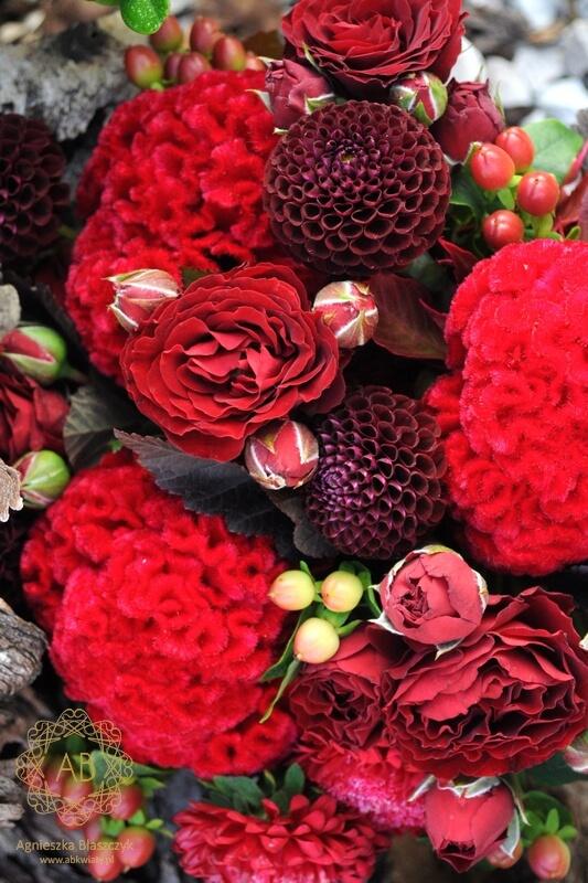 Bukiety druhen Kraków czerwone celozja róża dalia aster Agnieszka Błaszczyk abkwiaty